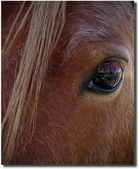 En la mira (Errlucho) Tags: chile horse macro textura animal caballo ojo mirada cril errlucho