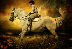Dorset Hunter-Jumper: White Horse Painting (Isabelle Ann) Tags: fab horse art digital rural painting caballo cheval jumping vermont photographer digitalart fantasy dorset isabelle cavallo cavalo pferd soe equine equus paard horseshows hunterjumper galope manchestervt dorsetvt equineart vermontsummerfestival artlibre isabelleann isabelleanngreen equestrianart hunterjumpers blueribbonwinne dorsetsummerfestival equinephotographer hunterjumpershows artistichorse isabellegreen equitationart hunterjumperart dorsethorseshow hunterjumperphotography hunterjumprphotographer isabellegreenphotography isabelleannphotography isabelleannhorses mostbeautifulhorses equineartist hunterjumperphotographer hunterjumperphotograhy