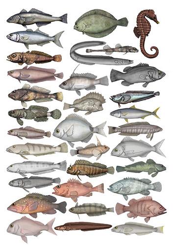 Carnada para peces de rio mar y lago