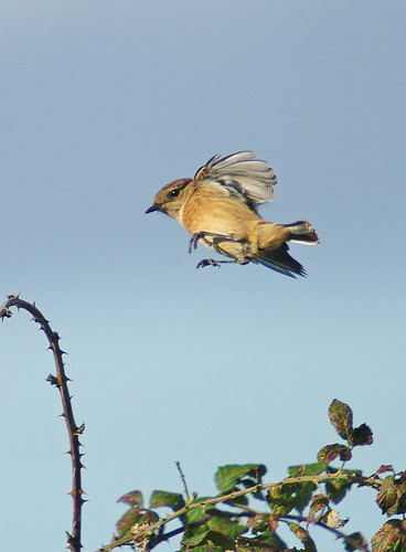Stonechat landing, Exminster UK