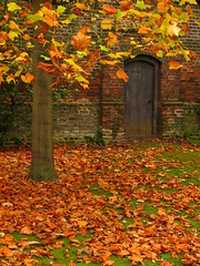 Autumn Leaves in Osterley Park