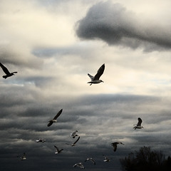 (uwajedi) Tags: autumn sunset sky cloud seagulls toronto ontario canada tree bird fall square day gulls flock ashbridgesbay thebeaches