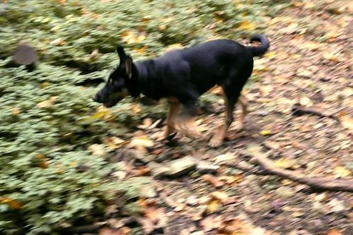 The Blurred Dog (Le Chien flou)