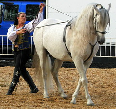 100 Things to see at the fair #94: Graceful horses