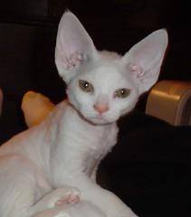 Cat #2