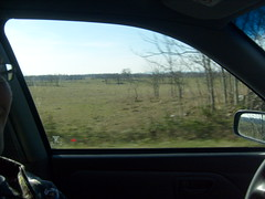 Driving Past a Field