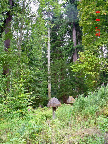 Diana's Grove, Blair Castle