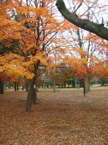 Autumn's end at Yoyogi Park