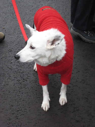 Dog Fashions (Winter 2008)