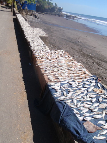 driedfish10001