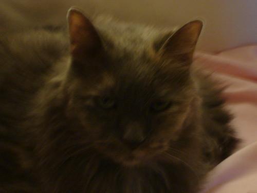 Cat 1208 008