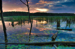 Mhlensee, Nationalpark Mritz, Mecklenburg-Vorpommern, Germany (HDR) (Xindaan) Tags: park blue vacation fab sky orange lake holiday tree nature water beauty yellow clouds forest sunrise germany landscape deutschland see march nikon bravo scenery wasser europa europe natur national swamp stump nikkor 16mm landschaft f5 allemagne 2009 baum hdr mvp mecklenburgvorpommern mritz d300 naturesfinest 4xp photomatix eow 1685 baumstumpf supershot flickrsbest mecklenburgerseenplatte nationalparkmritz mywinners abigfave platinumphoto anawesomeshot superaplus aplusphoto ultimateshot flickrdiamond mhlensee theunforgettablepictures thatsclassy 1685mm 1685mmf3556gvr vosplusbellesphotos afs1685mm updatecollection magicunicornverybest newgoldenseal wonderworldgallery