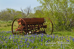 Farm Equipment and Bluebonnets