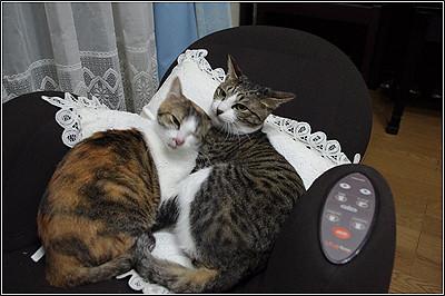 今日の猫(2011-05-14)