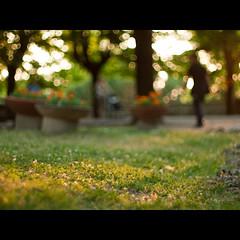 All'aria aperta (Un ragazzo chiamato Bi) Tags: sunset pen 50mm tramonto dof asahi pentax takumar bokeh f14 super olympus ep1 terni sfocato 43adapter profonditdicampo giardinipubblici lapasseggiata lennesimafotopienadisfocatoepoveradicontenutomastavoingiroatestareilnuovotakumarenonpotevononfarprendereunpdariaanchealvecchio