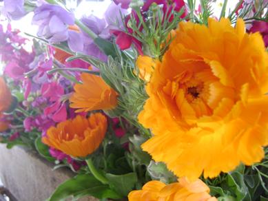 Maya's Farm flowers