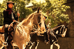 'Dentrando a el 'poblao' (Eduardo Amorim) Tags: horses horse argentina criollo caballo cheval caballos spur spurs cavalos sperone pferde poncho cavalli cavallo cavalo gauchos pferd loro tack pala apero chevaux gaucho bridle staffa loros stirrup platería bozal gaúcho estribo cabezada campero provinciadebuenosaires cabezadas recado gaúchos sanantoniodeareco esporas areco crioulo caballoscriollos criollos nazarenas nazarena espora pilchas pretal espuelas cabeçada pilchasgauchas steigbügel recao camperos redea bozales plateríacriolla espuela crioulos cavalocrioulo caballocriollo peiteira rédeas campeiros campeiro cavaloscrioulos rédea estrivo buçal redeas buçais étrier explorewinnersoftheworld