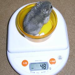コー太は先週から体重が増えました