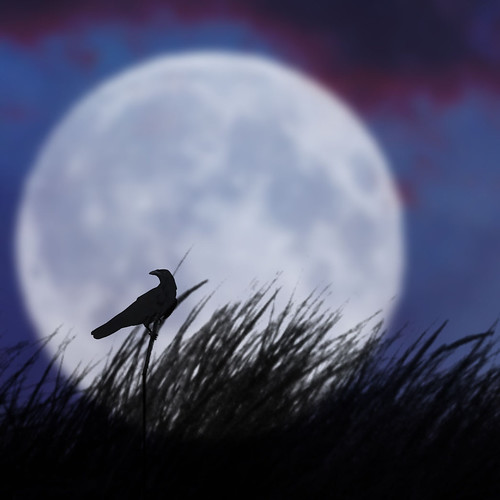 The bird and the moon II
