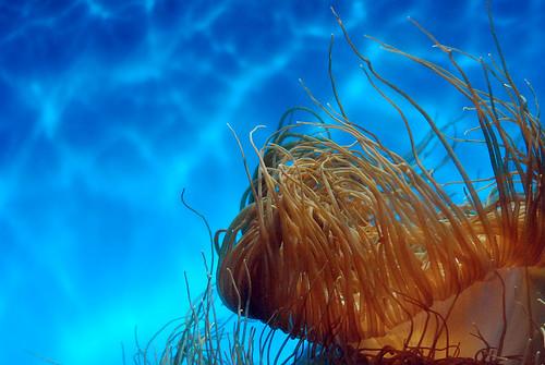 i wanna live underwater