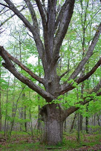 tree DSC_6996
