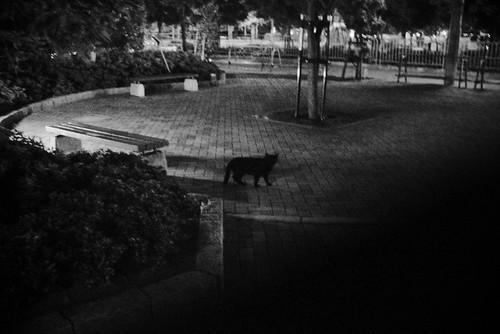 闇に蠢く黒い影