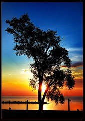 Shining Through (vw4ross) Tags: blue sunset sky orange sun tree beach silhouette colorful lakeerie greatlakes lorain eastbeach colorfulsky 18200mmvr lakeviewbeach mywinners diamondclassphotographer flickrdiamond