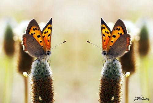 Reflejos de mariposa