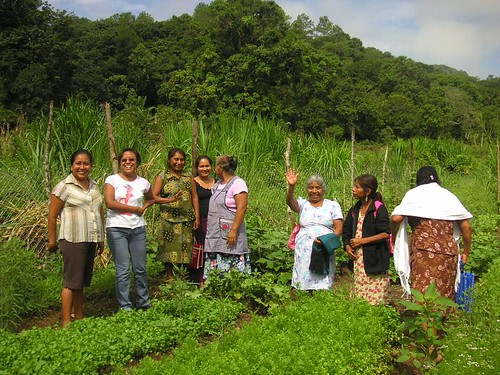 organic gardening in Mexico with Coffee Kids and FomCafe