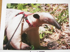 My Anteater Calender - August 08