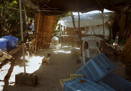 カイジ浜の猫の休憩所