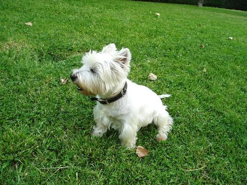 El perrón en el parque 2