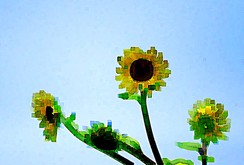 Cubist Sunflowers 3
