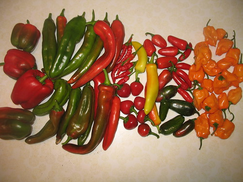 That is a lot of peppers and chiles