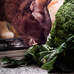O Gato e Os Brcolis [The Cat and the Broccoli] (Jim Skea) Tags: kitchen funny humor broccoli gato yami cozinha pretinho brcolis speedlightsb600 nikkor50mmf18daf