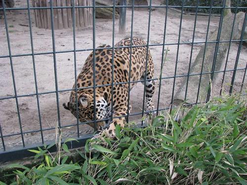Zoológico alemão 11