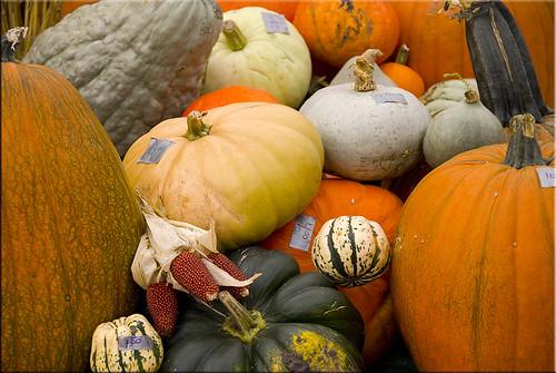 FarmersMaket2008 Colour Gourds