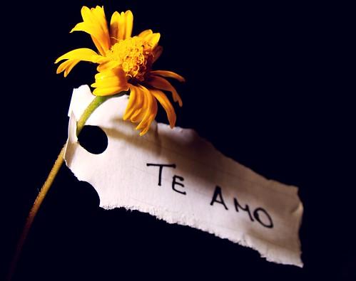 quinta flower apaixonada! ツ por Ana_Cotta.