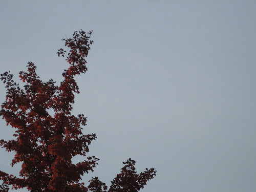 red tree grey sky