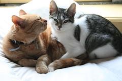 IMG_0231 (Erik Stronks) Tags: katten henk gerda
