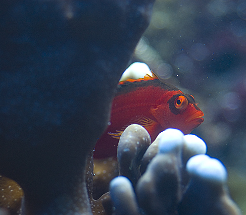 Fish for Sale in West Des Moines - Reef Central Online