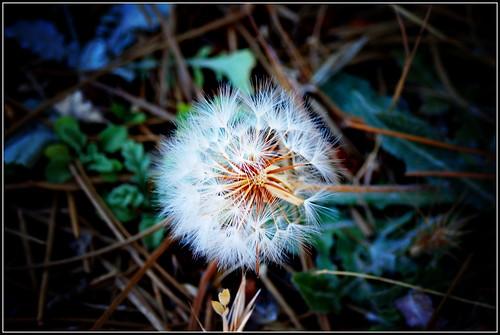un deseo, y a soñar