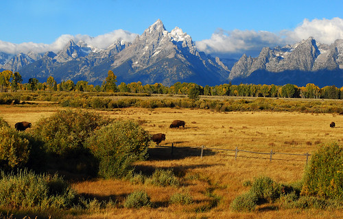 Fall - Grand Tetons -1055b