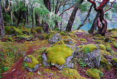 along a favorite hiking trail (Ray L G) Tags: canada moss rocks bc vancouverisland pacificocean lichen douglasfir eastsookepark arbutustree temperaterainforest