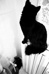 La peque mirando a su mama.... (nicoletta77) Tags: bw animal cat blackcat bagno gatto nero gatas animalidacompagnia