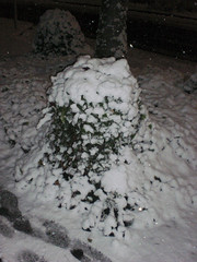 This blanket of snow came down in less than an hour (the Art Inside) Tags: winter snow germany bonn eruope