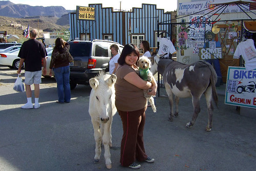 We were told to keep the dogs away from the burros.