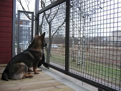 IMG_2267 (Niina J.) Tags: eläimet koirat osmo