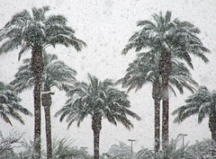 Palm Trees At 30 Degrees - Las Vegas, NV (tossmeanote) Tags: las vegas schnee winter snow west weather palms snowflakes frozen december day desert lasvegas snowy aerial casino palm assault palmtree environment chilly redrock snowfall 2008 15th summerlin precipitation wintry desertsnow lasvegassnow vegassnow snowlasvegas summerlinsnow summerlinsnowfall snowandlasvegas lasvegasandsnow snowandvegas snowvegas tossmeanote regionwide