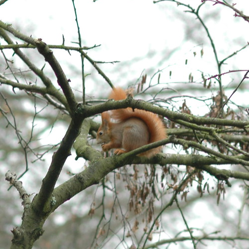 Squirrel TV